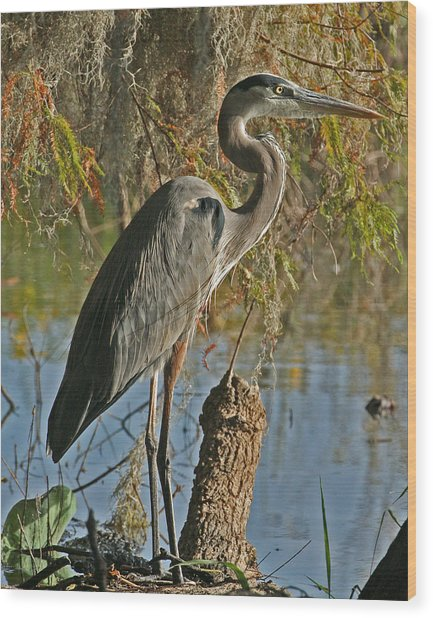 Great Blue Heron Wood Print by Jeff Wright