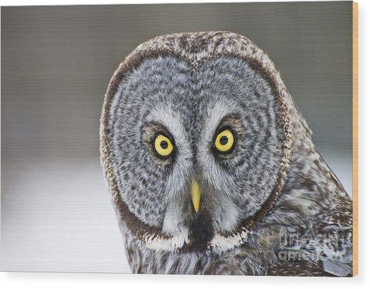 Great Gray Owl Portrait Wood Print