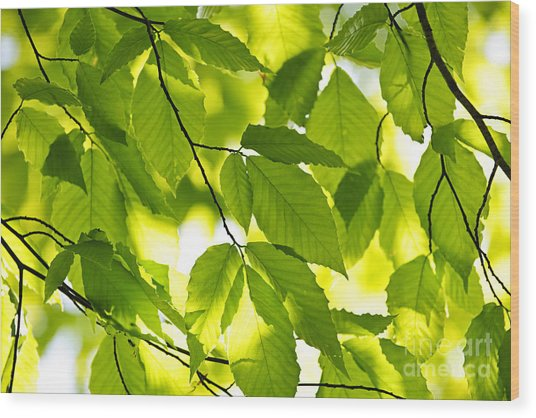 Green Spring Leaves Wood Print