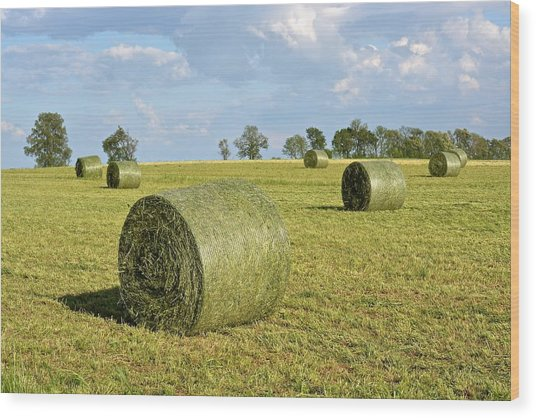 Hay Bales In Spring Wood Print