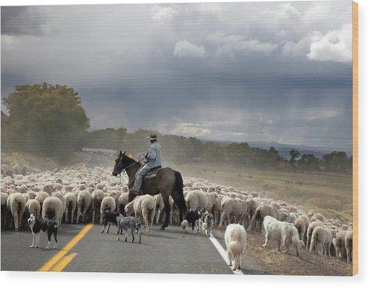 Herding Sheep Wood Print by Jim West