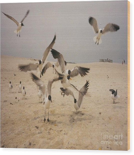 In Flight Wood Print by Mj Petrucci