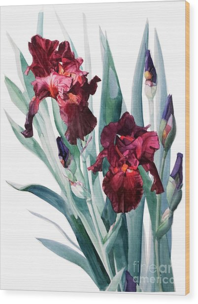 Dark Red Tall Bearded Iris Donatello Wood Print