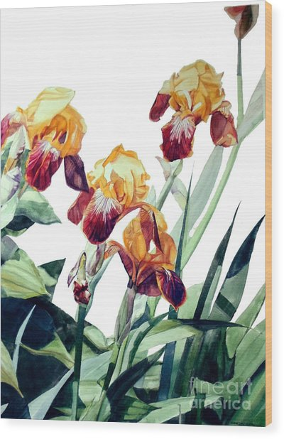 Watercolor Of Tall Bearded Irises I Call Iris La Vergine Degli Angeli Verdi Wood Print