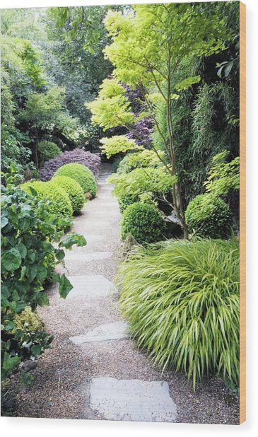 Japanese Garden Wood Print by Anthony Cooper/science Photo Library