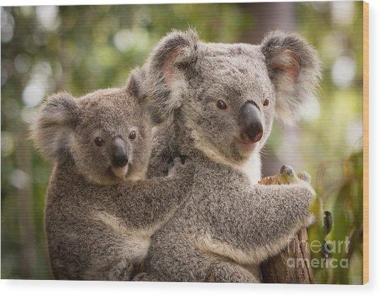Koala And Joey Wood Print