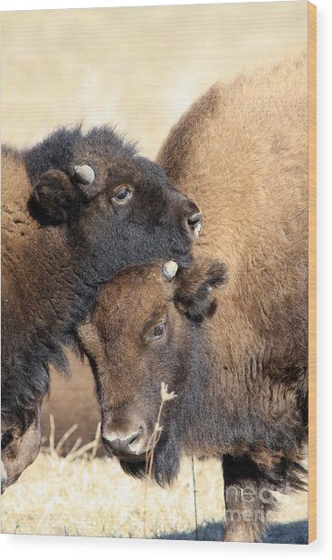 Lean On Me Wood Print by Rick Rauzi