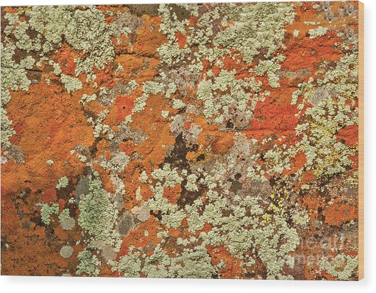 Wood Print featuring the photograph Lichen Abstract by Mae Wertz