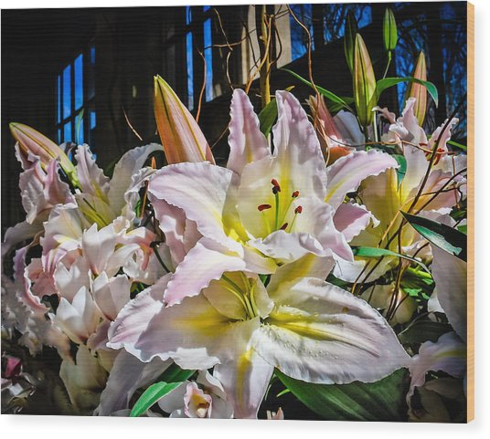 Lilies Out Of The Shadows Wood Print