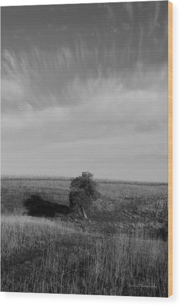 Lonely In The Field Wood Print by Robert Geier