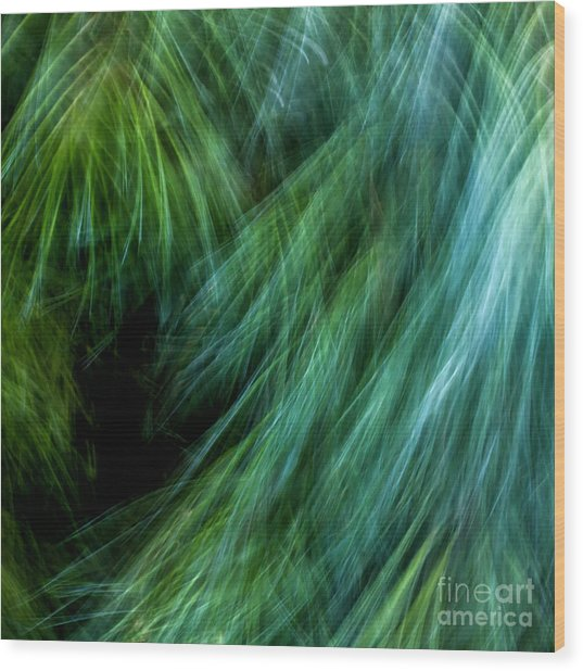 Meditations On Movement In Nature Wood Print