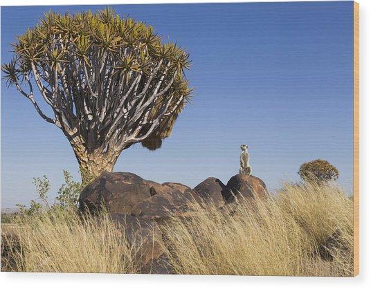 Meerkat In Quiver Tree Grassland Wood Print