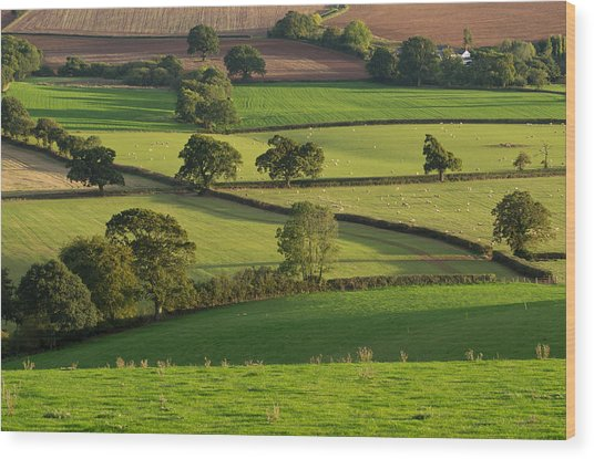 Mid Devon Fields Wood Print