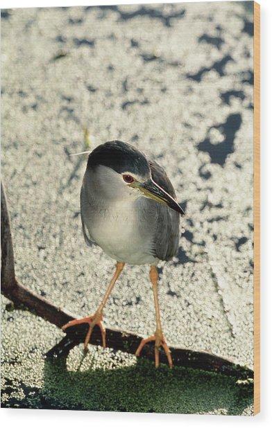 Night Heron Wood Print by Tony Camacho/science Photo Library