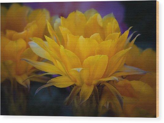 Orange Cactus Flowers  Wood Print