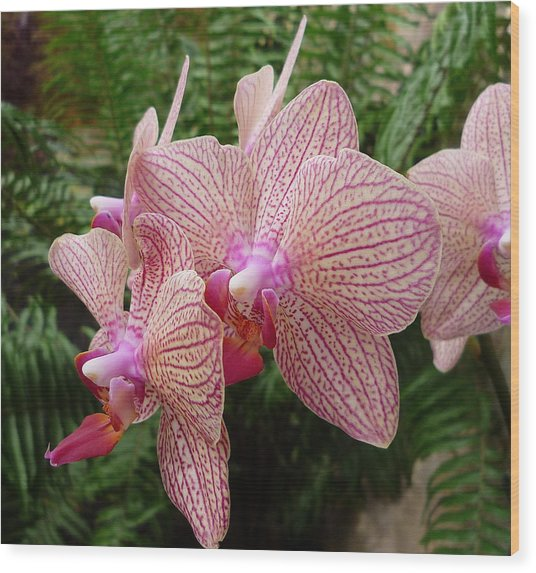 Orchid No.7 Wood Print by Gregory Young
