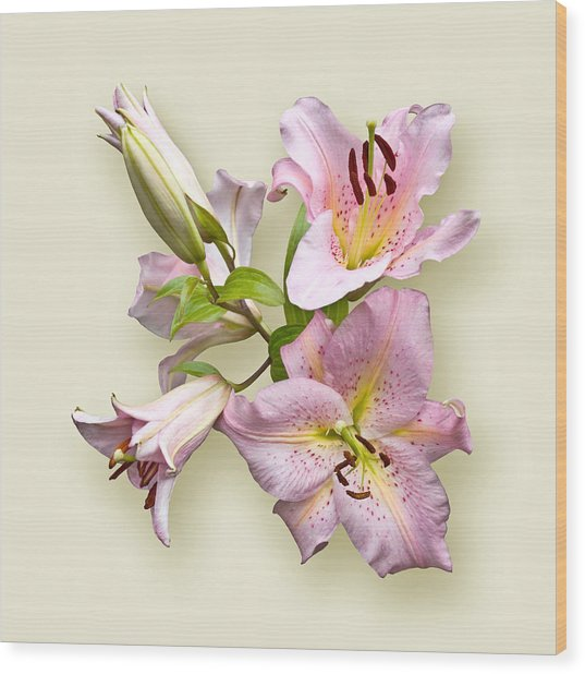 Pink Lilies On Cream Wood Print