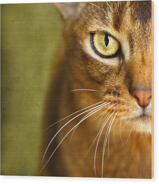 Portrait Of An Abyssinian Cat With Textures Wood Print