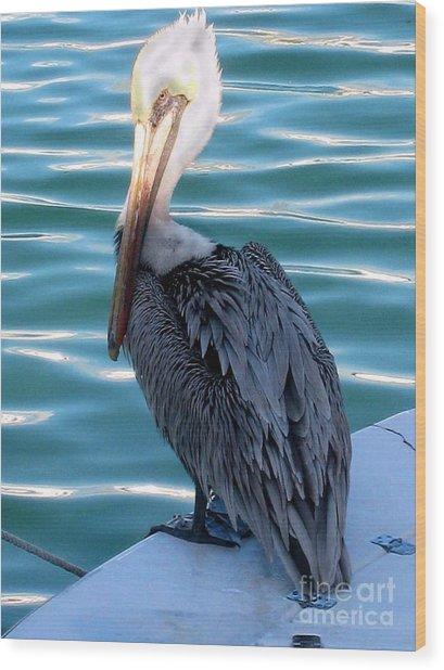 Precious Pelican Wood Print by Claudette Bujold-Poirier