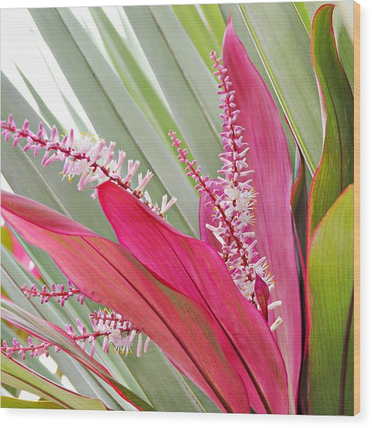 Pretty Pink In Key West Wood Print