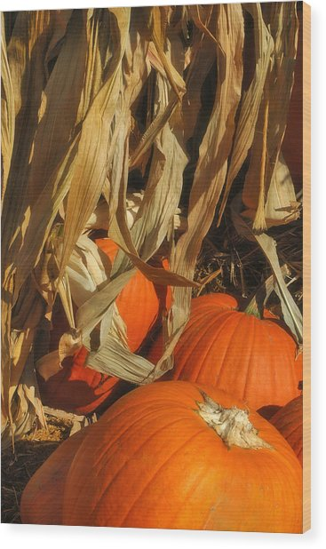 Pumpkin Harvest Wood Print by Joann Vitali