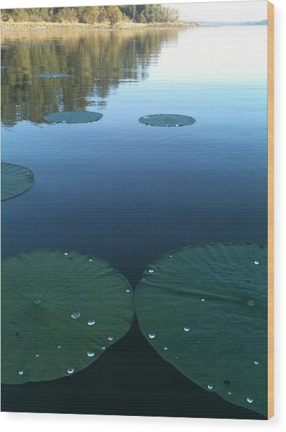 Rayburn Lilly Pads Wood Print