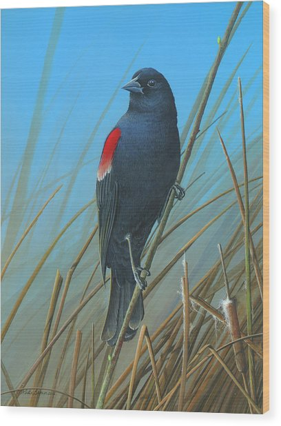 Red-winged Black Bird Wood Print
