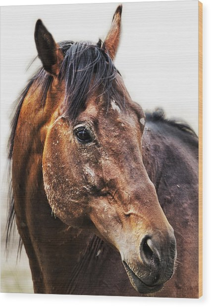 Wood Print featuring the photograph Resilience by Belinda Greb