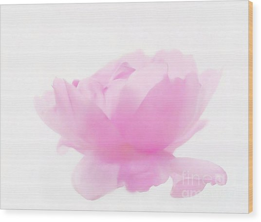 Rose Wood Print by Sylvia  Niklasson
