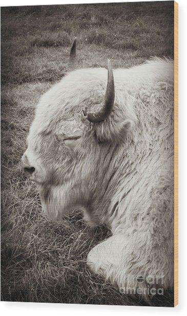 Sacred Buffalo Wood Print