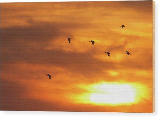 Sandhill Cranes (grus Canadensis Wood Print