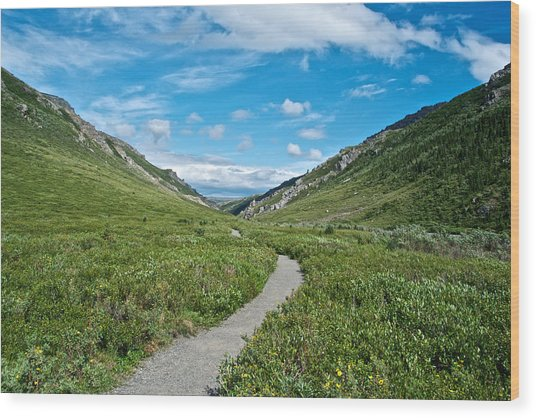 Savage River Trail In Denali Np-ak    Wood Print