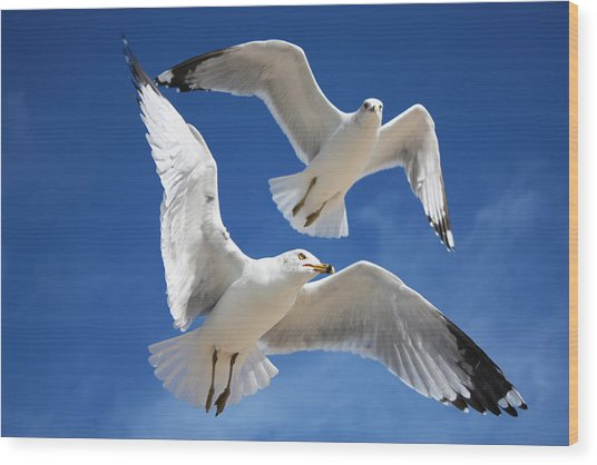 Seagulls In Love Wood Print