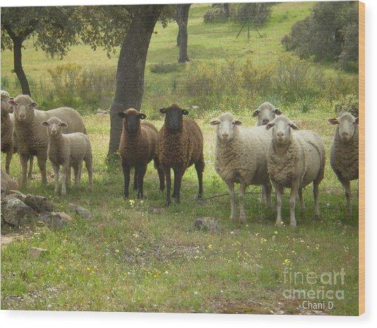 Sheep In Extremadura Wood Print