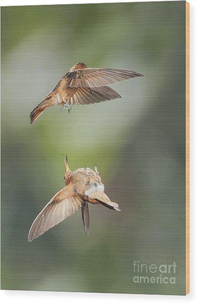 Shining Sunbeam Hummingbirds Wood Print