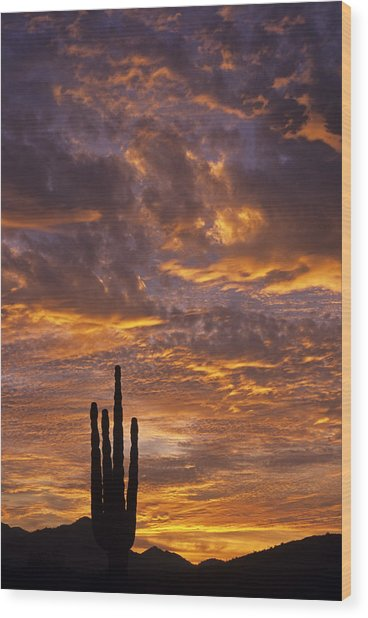 Silhouetted Saguaro Cactus Sunset At Dusk With Dramatic Clouds Wood Print