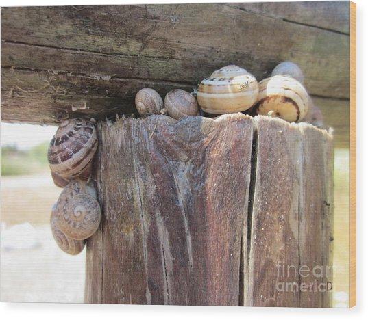 Snails Wood Print