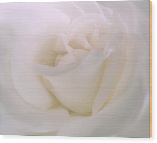 Softness Of A White Rose Flower Wood Print