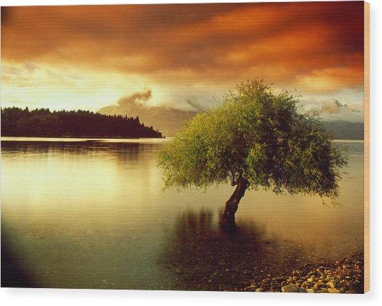 South Island New Zealand Wood Print