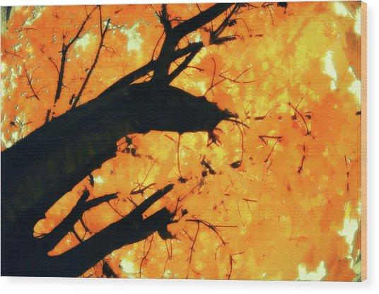 Sugar Maple (acer Saccharum) Wood Print