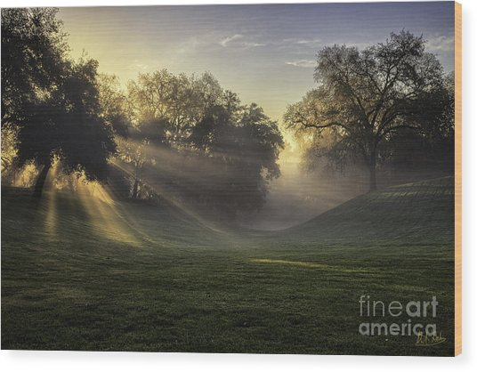 Sunrise Among The Oaks Wood Print