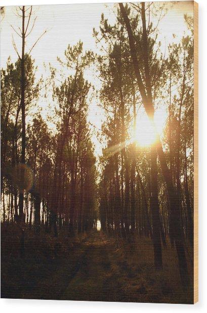 Sunrise Pin Tree Forest Wood Print by Michel Mata