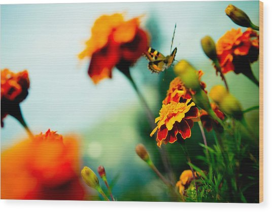Tagetes And Buterfly Fly Away  Wood Print