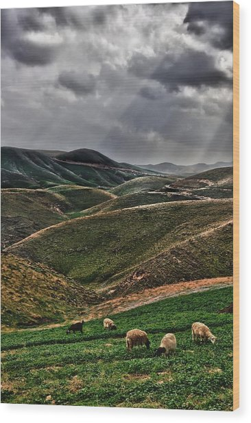 The Lord Is My Shepherd Judean Hills Israel Wood Print