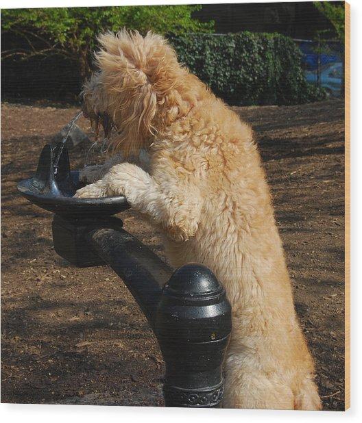 Thirsty Dog Wood Print
