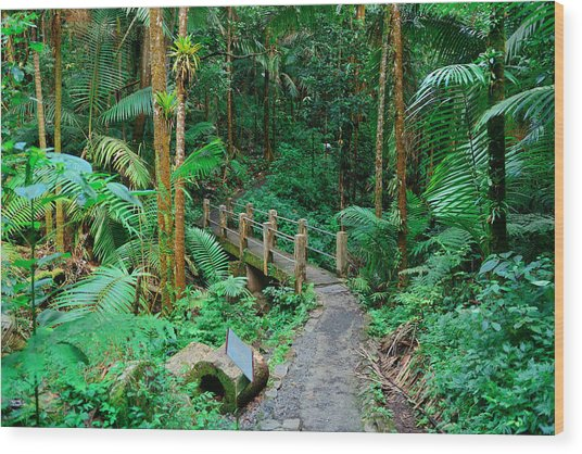 Tropical Rain Forest In San Juan Wood Print