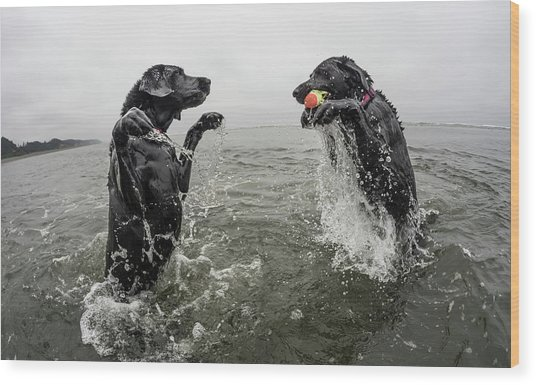 Two Dogs Play In The Water Wood Print