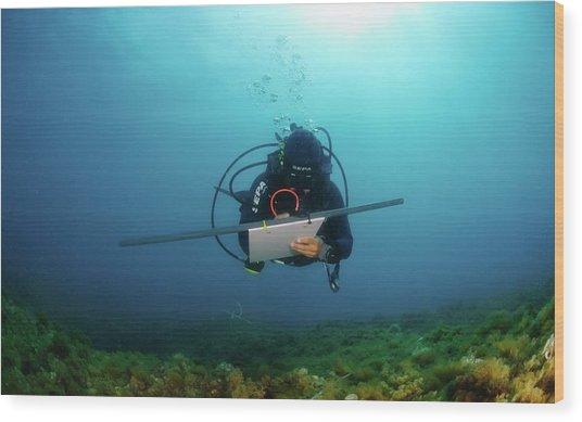 Underwater Survey Wood Print by Photostock-israel