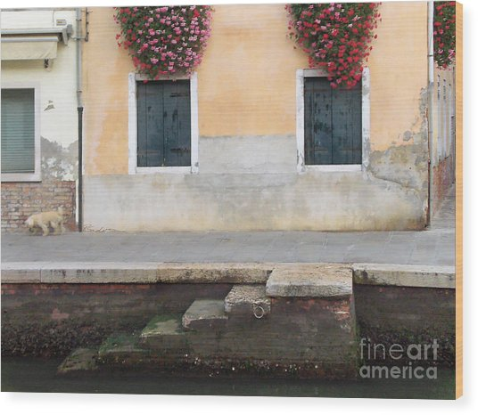 Venice Canal Shutters With Dog And Flowers Horizontal Wood Print