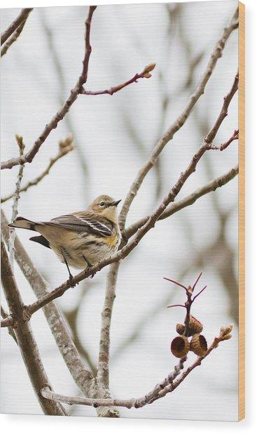 Warbler Calls Wood Print